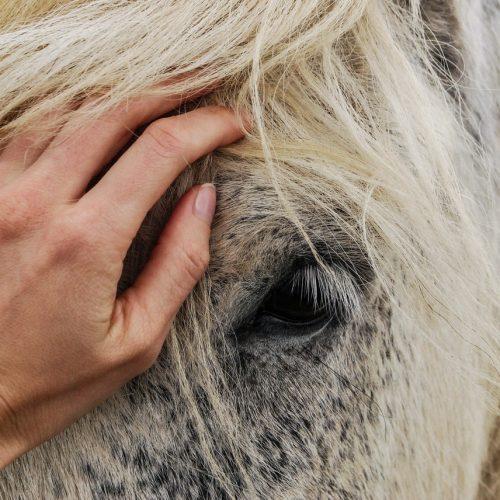 adorable-affection-animal-beautiful-614521