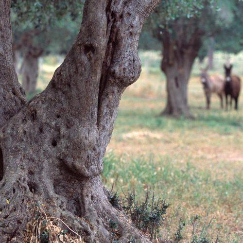 corte degli ulivi bio agriturismo (21)